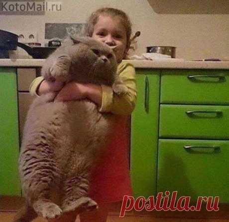 Отнеси меня скорей к холодильнику!