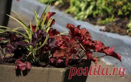 Контейнерный сад своими руками – 6 советов по созданию и уходу | Личный опыт (Огород.ru)
