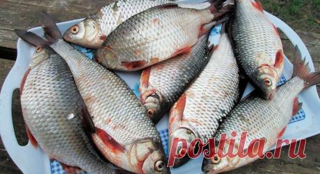Как сохранить улов на рыбалке и по пути домой в жару | жерех | Яндекс Дзен