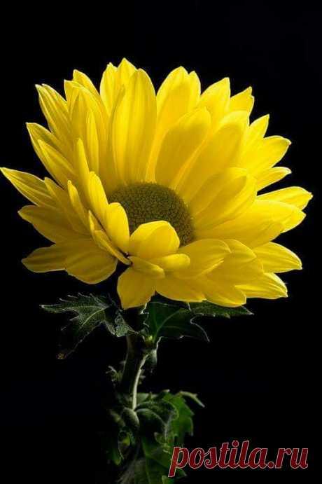 Flowers– Google+