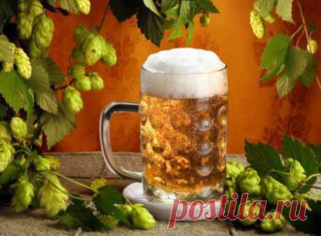 (+1) тема - Пиво можно не только пить..   КРАСОТА И ЗДОРОВЬЕ