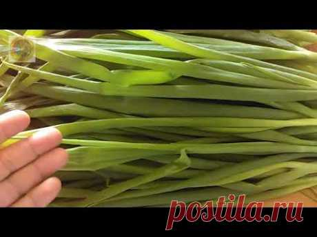 Как высушить зеленый лук. Сбор чеснока.