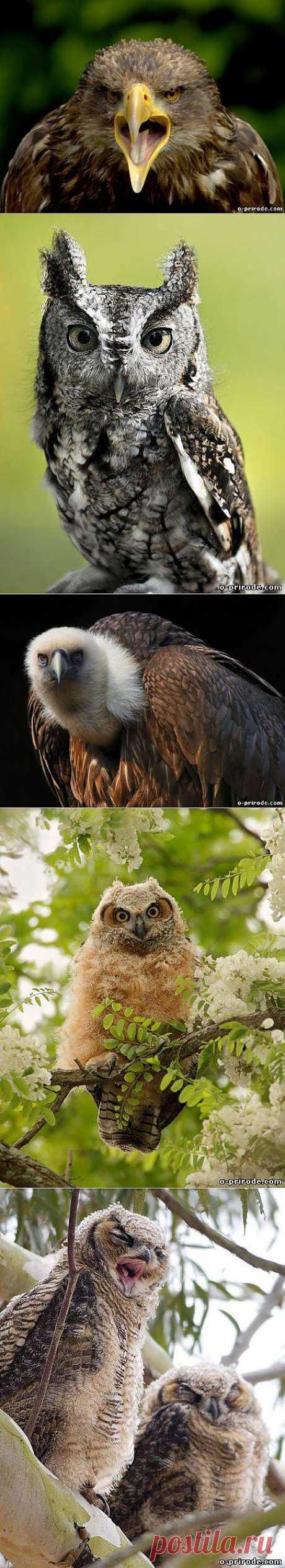 Птица охотник - Фото мир природы
