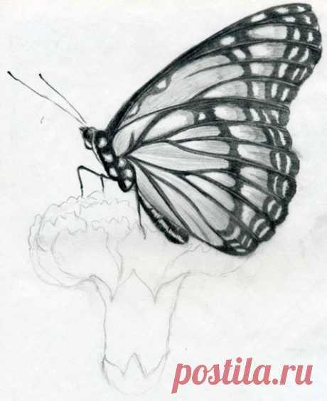 Рисуем бабочку карандашом — Сделай сам, идеи для творчества - DIY Ideas