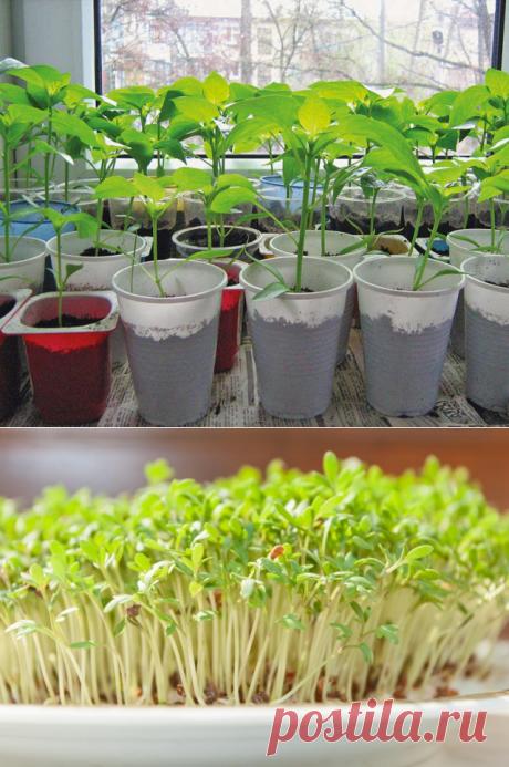 Травы и специи, которые можно выращивать на подоконнике — Полезные советы