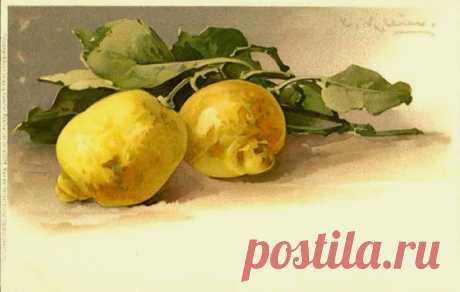 ветка лимон картина - Поиск в Google