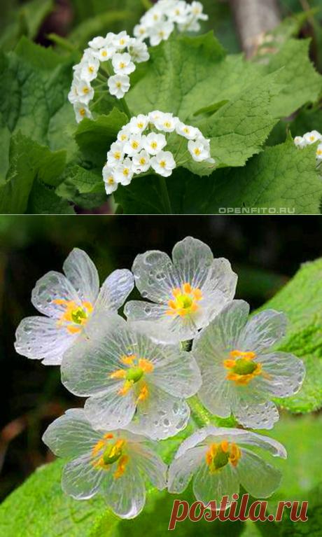 Невероятный, волшебный хрустальный цветок |  Наша жизнь| сад и огород | Яндекс Дзен