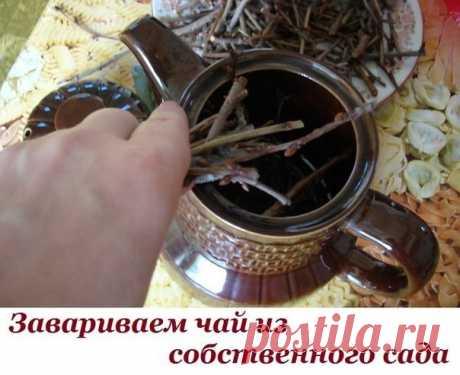 Завариваем чай из собственного сада  Такие полезные веточки!  Мы покупаем чай не понятно где и как собранный, в идеале – действительно с индийских плантаций, в то время как в нашем саду растет отличная заварка! Говорите, в вашем саду сейчас ничего нет, кроме голых деревьев? Они то нам и нужны. Точнее – их веточки.  Как заваривать чай из веток  Для приготовления такого напитка прокипятите тонкие веточки 10-15 минут, а затем оставьте настояться на ночь. Перед употреблением п...