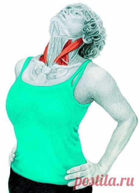 Растяжка на все зоны: как улучшить осанку и линии тела