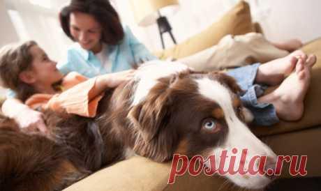 Как подобрать мебель для дома, где правят дети и собаки