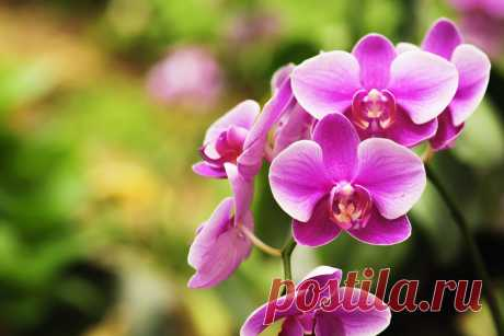 Какой должен быть грунт для орхидей? — Ботаничка.ru