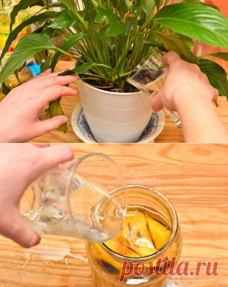 Простое средство, которое сотворит чудо даже с самыми хилыми растениями