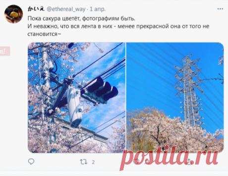 (1) かいえ в Твиттере: «Пока сакура цветёт, фотографиям быть. И неважно, что вся лента в них - менее прекрасной она от того не становится~ https://t.co/mV02DuMXoN» / Твиттер