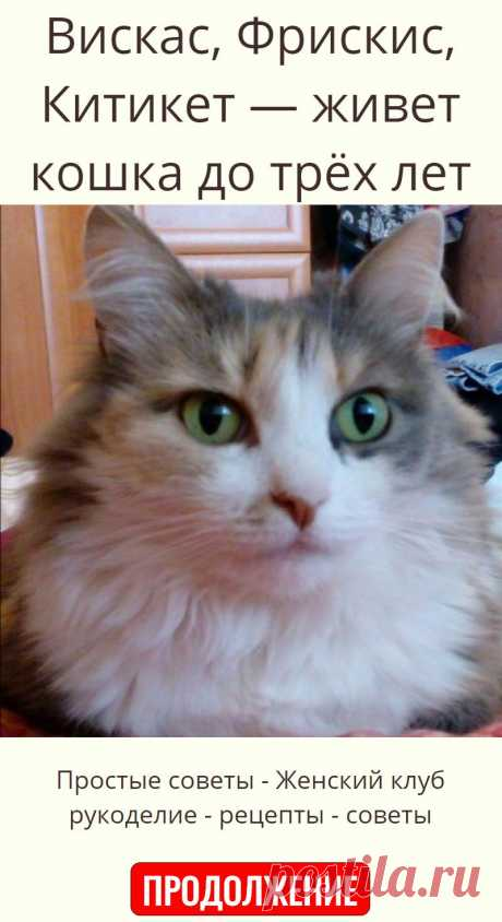 Вискас, Фрискис, Китикет — живет кошка до трёх лет