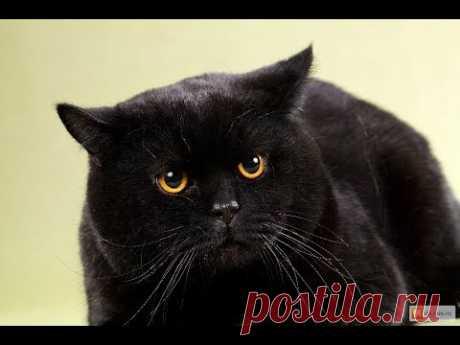 Регрессия. Кошка-ведьма. Сжигание контрактов. Я-ангел !  ч. 15 б - YouTube