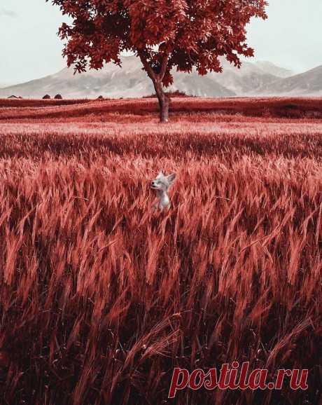 Как видят мир люди, страдающие тританопией — Здоровое Инфо