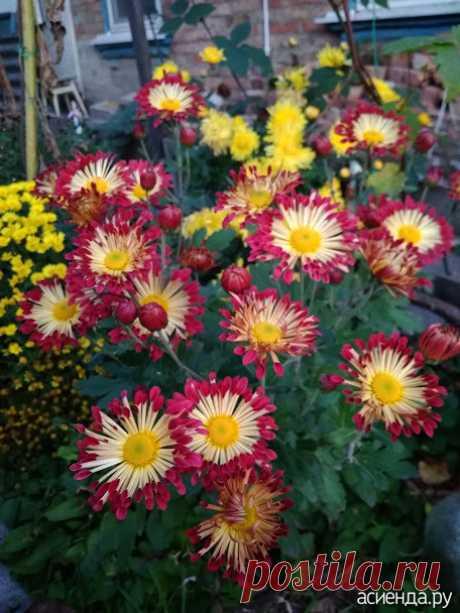 Моя клумба - октябрь: Группа Клумбы и цветники