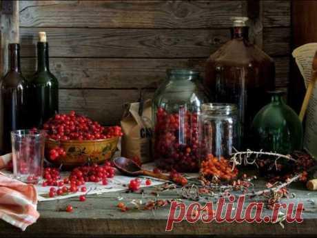 Спиртные напитки из ягод красной калины — домашнее вино, настойка, ликер и наливка: лучшие рецепты