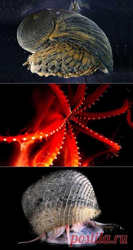 10 самых странных морских моллюсков | Fresher - Лучшее из Рунета за день