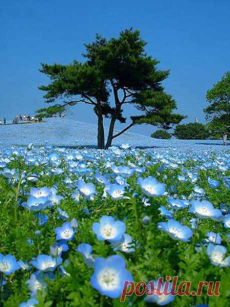 Дерево и цветы