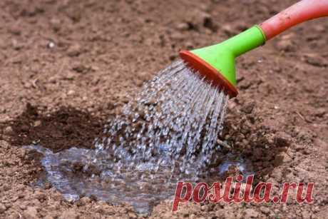 """Готовим грядку для посадки, или 3 способа """"разбудить"""" почву   Почва и плодородие (Огород.ru)"""