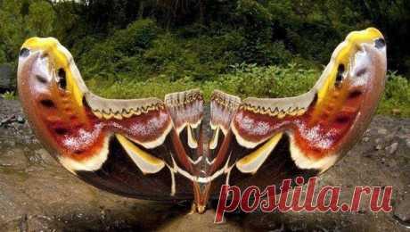 (1) Facebook.Самая la mariposa grande en el mundo.