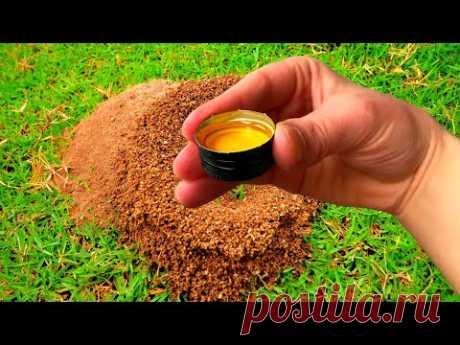 Как избавиться от муравьев на участке. Дешевый и простой способ
