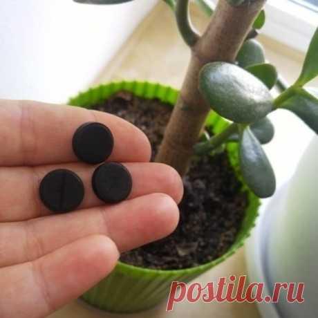 Как максимально эффективно использовать активированный уголь для растений