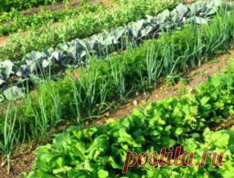 37 хитростей для садоводов и огородников - Садоводка