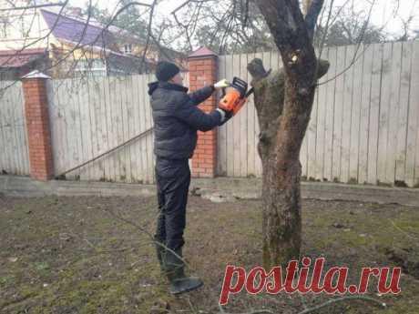 Весенняя подкормка плодовых деревьев и ягодных кустарников   Уход за садом (Огород.ru)
