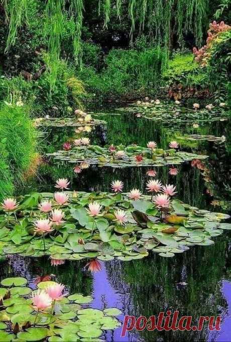 Есть в старом графстве черный пруд... ...там лилии цветут...