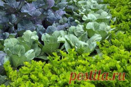 Смешанные посадки: выбираем лучших соседей для растений | Все о грядках (Огород.ru)