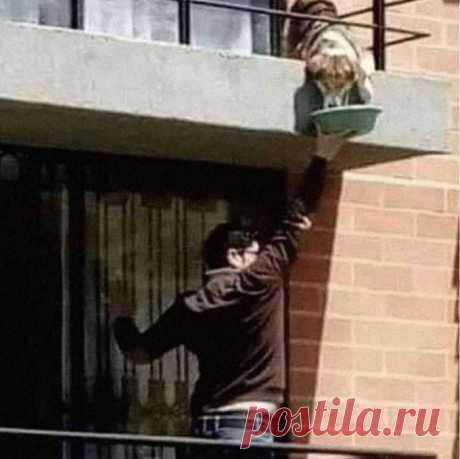 """Пьяный Твиттер on Twitter: """"Итальянец обнаружил, что его сосед загремел в больницу и начал кормить его собаку таким способом до его возвращения. У этого мира ещё есть шанс. https://t.co/TOz3LN7LDW"""" / Twitter"""