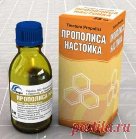 Прополис: если он есть в доме, то аптеки и врачи не нужны! Купите у пчеловодов и забудьте о таблетках!