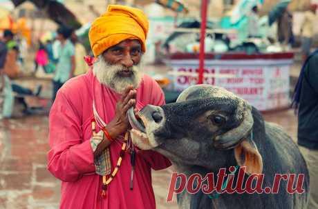 Индия: полезные советы туристам Полезная информация для путешественников, которые планируют поездку в Индию. Cъесть cтейк получится не везде  Индия — страна вегетарианцев. И поскольку корова считается у индуистов священным животным,…