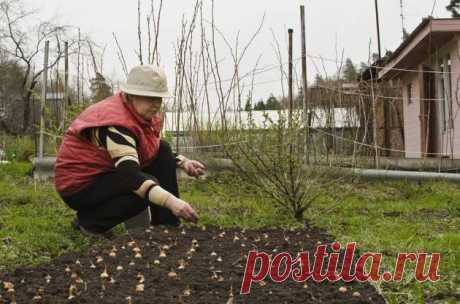 As it is correct to plant onion sets