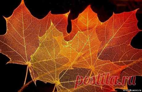 Осеннее хобби - Скелетирование листьев.