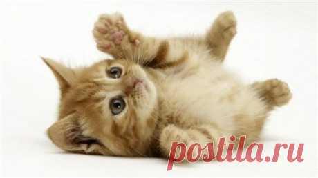 Любит ли Вас Ваш кот? - Интересное и необычное - ГОРНИЦА - дайджест новостей, авторские блоги