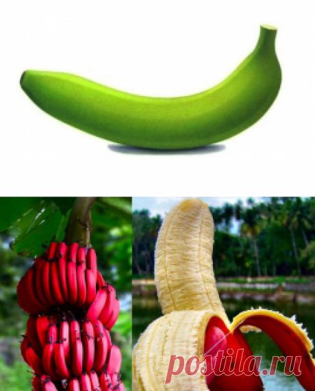 Что вы знаете о бананах ? - Садоводка