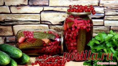 Соленые огурцы с красной смородиной на зиму - Рецепты для очень занятой мамы - Страна Мам