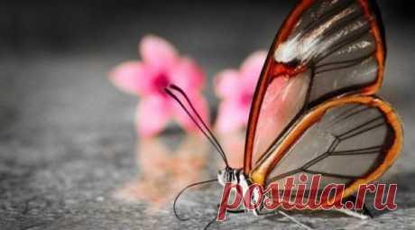 Фантастическая и невероятная бабочка-стеклянница