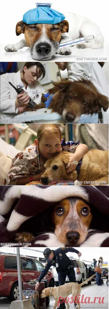 Удивительные факты о собаках | ПолонСил.ру - социальная сеть здоровья
