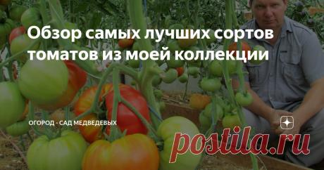 Обзор самых лучших сортов томатов из моей коллекции. Огород - сад Медведевых