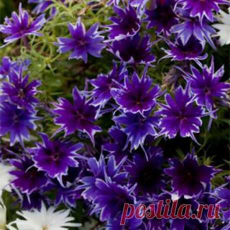 Нереально красивые новинки цветов, которые стоит высадить в своем саду | САД | Яндекс Дзен