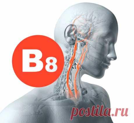 Витамин В8 (инозитол): при бессоннице, выпадении волос и похудении Инозит или инозитол – это вещество, которое вырабатывается в теле человека, и содержится в некоторых продуктах растительного и животного происхождения. Это важный компонент, влияющий на функции многих органов и систем. Исследования на животных показали, что его нехватка приводит к резкому возрастанию холестерина и выпадению волосяного покрова.