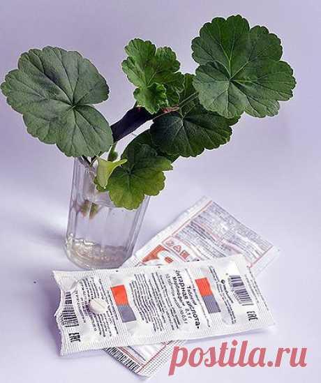 Как использовать янтарную кислоту? 4 ОСНОВНЫХ способа.  1 СПОСОБ: Предпосевная обработка семян слабым раствором янтарной кислоты У обработанных янтарной кислотой семен повышается всхожесть, растения лучше развиваются и реже болеют. Для замачивания семян используют 0,004%-ный раствор (40 мл 1%-ного основного раствора разбавляют в 1 л воды). Замачивают семена перед посевом не более чем на сутки, после слегка просушивают и высевают в грунт.  2 СПОСОБ: Обработка черенков раств...