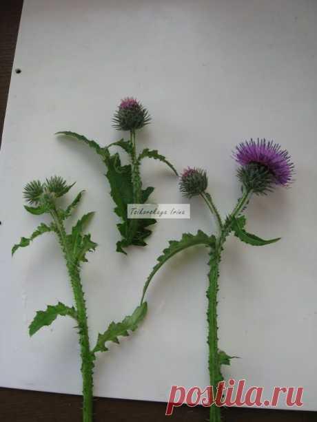 Мастер-класс смотреть онлайн: Как засушить растения: делаем объемный гербарий | Журнал Ярмарки Мастеров