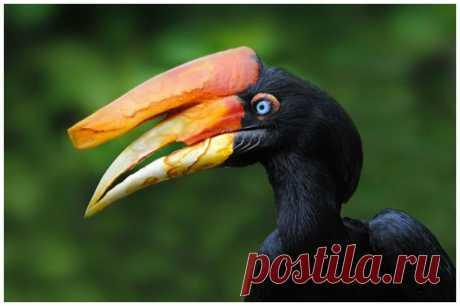 ТОП самых необычных и интересных птичьих клювов