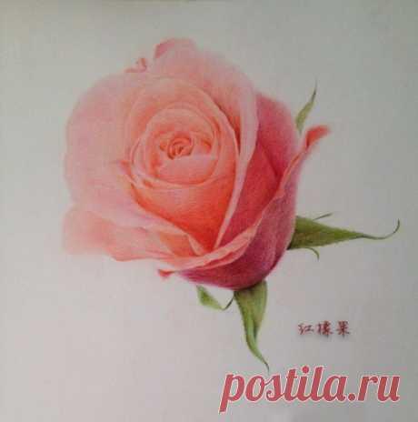 Рисуем чудесную розу