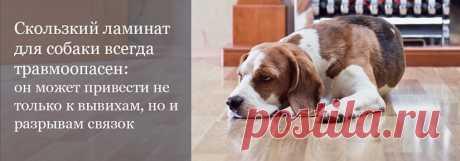 Какой ламинат купить если в доме живет собака? Выбираем лучший вариант и для животного, и для владельца   #ламинатдлясобаки#ламинат33классадлясобаки#ламинатдлякошки#ламинатдляживотных#Stonefloorновосибирск